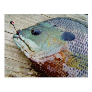 trullo púrpura amarillo azul, pescado del Lepomis  Postales