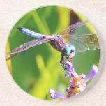 Trullo y libélula púrpura