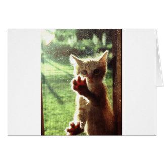 Truman in kitchen window card