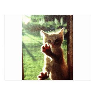 Truman in kitchen window postcard