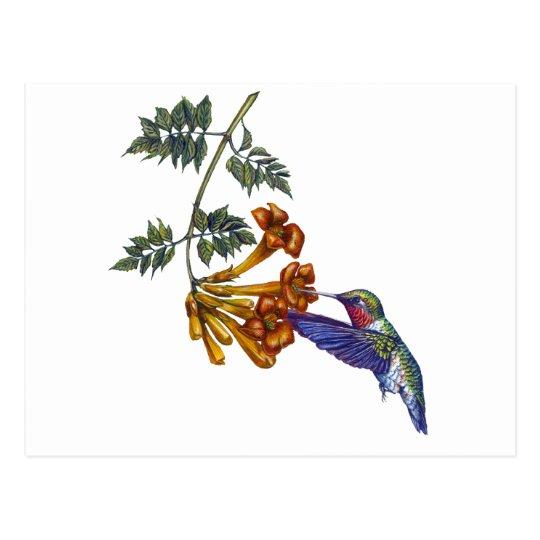 Trumpet Creeper Ruby Throated Hummingbird Postcard