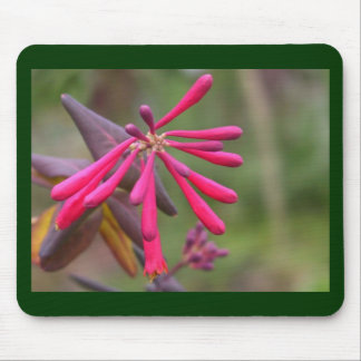 Trumpet Honeysuckle Buds of Coral Woodbine Mouse Pad