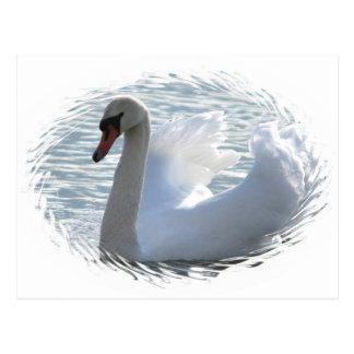 Trumpet Swan Postcard