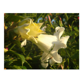 Trumpet Vine Flower with a Wasp Postcard