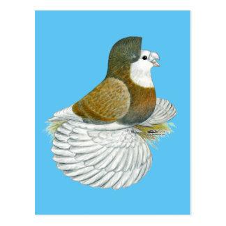 Trumpeter Pigeon AOC Baldhead Postcard