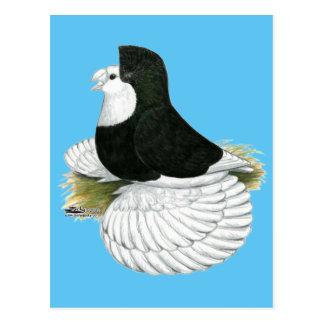 Trumpeter Pigeon Black Baldhead Postcard