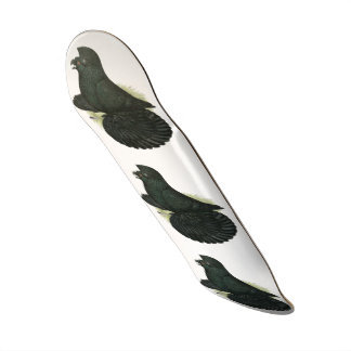 Trumpeter Pigeon Black Skateboard