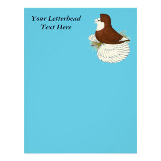 Trumpeter Pigeon Red Baldhead Letterhead