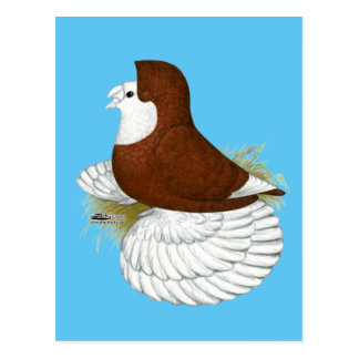 Trumpeter Pigeon Red Baldhead Postcard