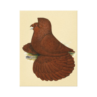 Trumpeter Pigeon Red Canvas Print