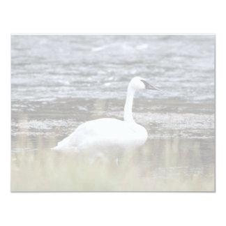 Trumpeter Swan 4.25x5.5 Paper Invitation Card