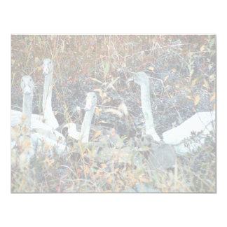 Trumpeter Swan Cygnets 4.25x5.5 Paper Invitation Card
