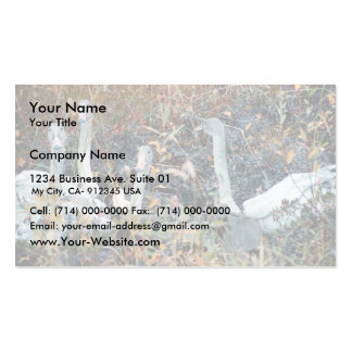 Trumpeter Swan Cygnets Double-Sided Standard Business Cards (Pack Of 100)