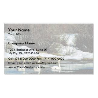 Trumpeter swan Double-Sided standard business cards (Pack of 100)