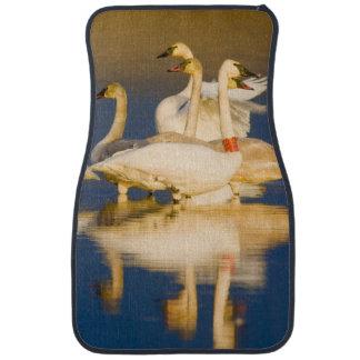 Trumpeter swan family in last light at pond at 2 car floor mat