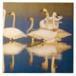 Trumpeter swan family in last light at pond at 2 ceramic tile