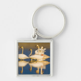 Trumpeter swan family in last light at pond at 2 keychain
