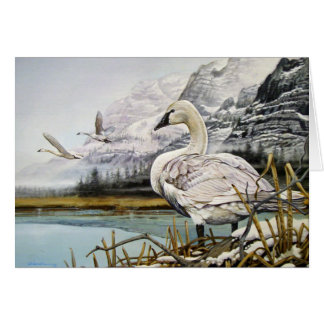 Trumpeter Swan Greeting Cards