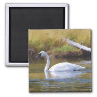 Trumpeter Swan Magnet