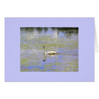 Trumpeter Swan Note Cards