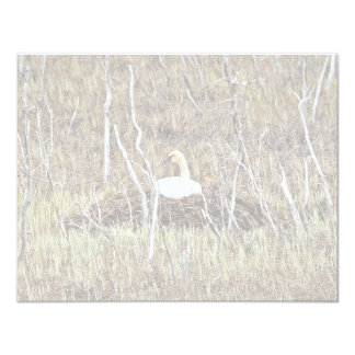Trumpeter Swan on Nest 4.25x5.5 Paper Invitation Card
