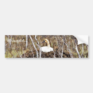 Trumpeter Swan on Nest Bumper Sticker
