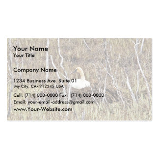 Trumpeter Swan on Nest Business Card