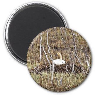 Trumpeter Swan on Nest Fridge Magnets
