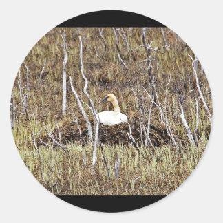 Trumpeter Swan on Nest Sticker