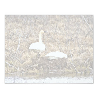 Trumpeter Swan Pair at Nest 4.25x5.5 Paper Invitation Card
