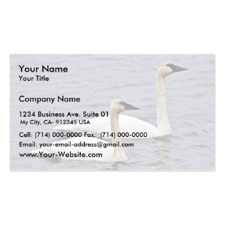 Trumpeter Swan Pair Double-Sided Standard Business Cards (Pack Of 100)