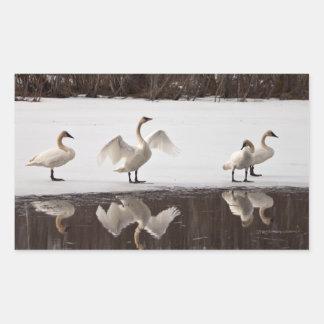 Trumpeter Swan Pairs Rectangular Sticker