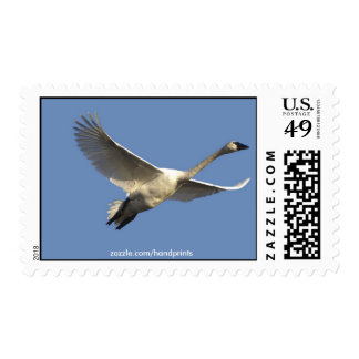 Trumpeter Swan Postage Stamps