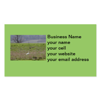 Trumpeter Swan San Juan Island Birthday Sympathy Business Card Templates
