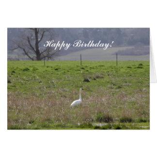 Trumpeter Swan San Juan Island Birthday Sympathy Cards