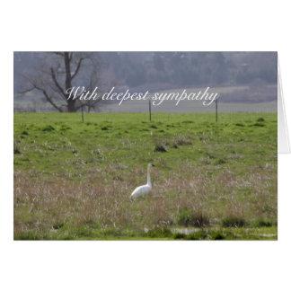 Trumpeter Swan San Juan Island Birthday|Sympathy Card