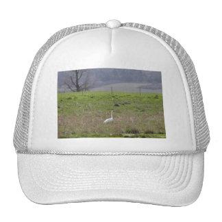 Trumpeter Swan San Juan Island Birthday|Sympathy Trucker Hat