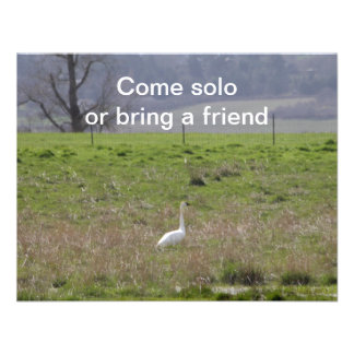 Trumpeter Swan San Juan Island Birthday Sympathy Invite