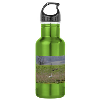 Trumpeter Swan San Juan Island Birthday|Sympathy Water Bottle
