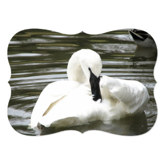Trumpeter Swan, Zoo Resident 5x7 Paper Invitation Card