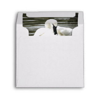 Trumpeter Swan, Zoo Resident Envelopes