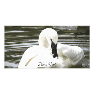 Trumpeter Swan, Zoo Resident Photo Card