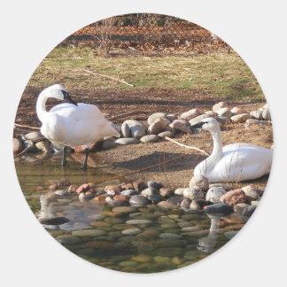 Trumpeter Swans Classic Round Sticker
