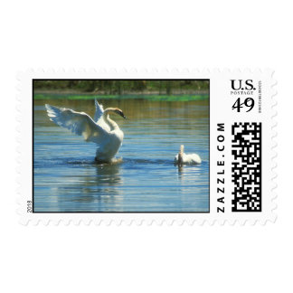 Trumpeter Swans Courting Postage
