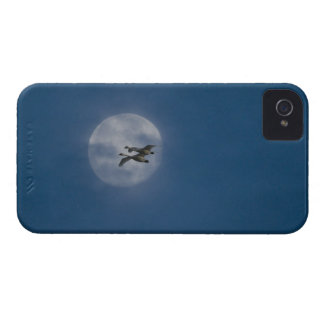 Trumpeter Swans (Cygnus buccinator) over winter iPhone 4 Covers