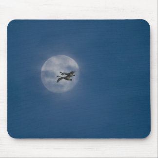 Trumpeter Swans (Cygnus buccinator) over winter Mouse Pad