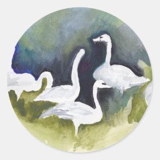 Trumpeter Swans in Skagit Valley Classic Round Sticker