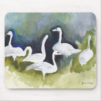 Trumpeter Swans in Skagit Valley Mouse Pad