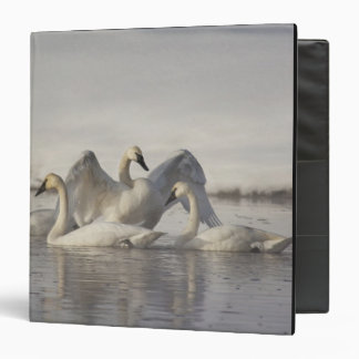 Trumpeter Swans in the Madison River in winter Binder