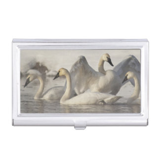 Trumpeter Swans in the Madison River in winter Business Card Case